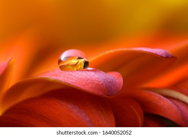 Drops of water dew on a leaf of a flower close-up macro on red purple blurred background. Abstract elegant delicious bright artistic image