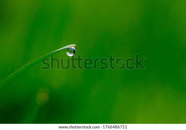 Drops of water hang on a single blade of grass