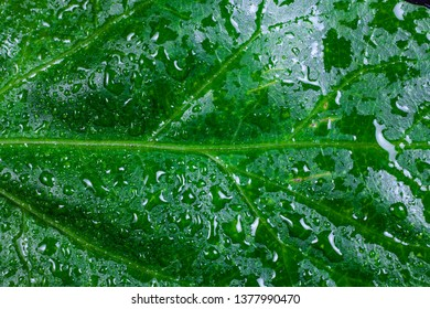 Drops of water on green leaves.