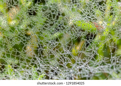 drops of water in a spiderweb