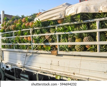 Drop-side truck body loaded with ripe pineapples