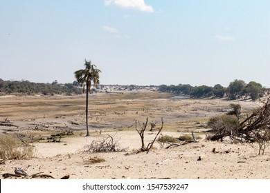 Dürre in Afrika Botswana entlang des Boteti-Flusses. Globale Erwärmung und extreme Dürre im Okavango Delta, Fluss-Pfad getrocknet mit Weidetieren auf der Suche nach Wasser. Trockenzeit während der Safari