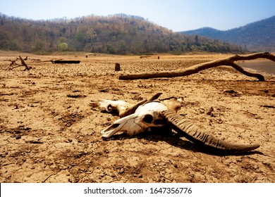 drought arid and cracked earth weather in dam or river, hot summer nature, skull dead cow buffalo cattle boat, surface clay soil rough crack pattern texture background, desert broken hot mud ground