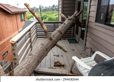 Drought causes dead pine tree to fall on house, on the Big Sur coastline, California Central Coast. near Cambria, CA.