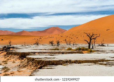 Drought cracked land with dead trees and dunes in the background. Deadvlei, a white clay pan in Sossusvlei, Namibia.