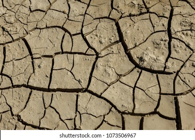Drought. Dried bottom of lake river sea. Dead crabs dry from drought. Dry fractured soil of drought. Concept of drought, climate change, death without moisture. Ecology. Catastrophe. Mysticism Cracked