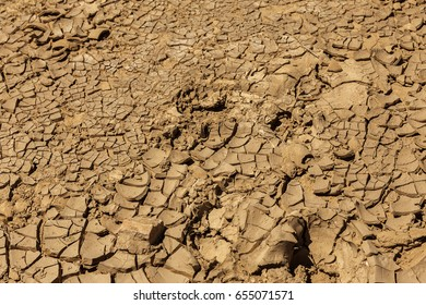 Drought. Dried bottom of lake, river, sea. Dead crabs dry from drought. Dry fractured soil of drought. Concept of drought, climate change, death without moisture. Ecology. Catastrophe. Mysticism