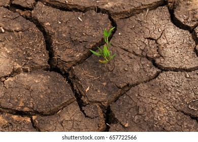 Drought. Dry lake, river, sea. young shoot of plant through cracks. Dry fractured soil of drought. concept of drought, climate change, death without moisture. Ecology. Catastrophe. Mystic