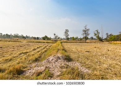 Drought fields, straw and dry grass during the summer of Thailand. Southeast Asia