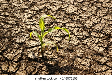 Drought land, plant struggling for life