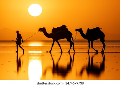 Drover leads a caravan of camels on the salt lake at sunrise