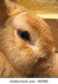 Drowsy Looking Rabbit