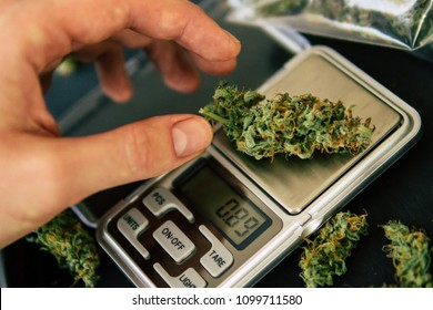 A drug dealer weighs cannabis flower marijuana on a scales concept of legalizing herbs weed close up