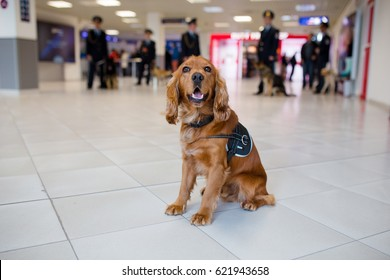 Drug detection dog at the airport  on the background of cops.Horizontal view