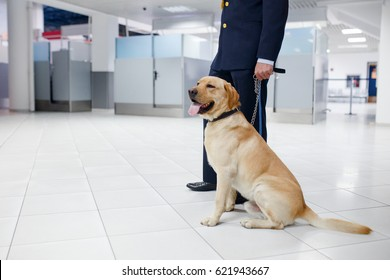 Drug detection dog at the airport sitting around the cop.Horizontal view