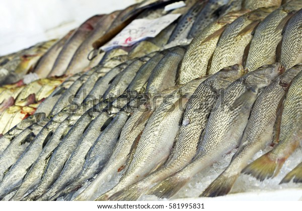 Drums or croakers exposed in fish market for sale to the consumer