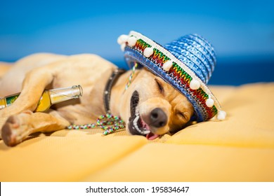 drunk chihuahua dog having a siesta and hangover with beer bottle