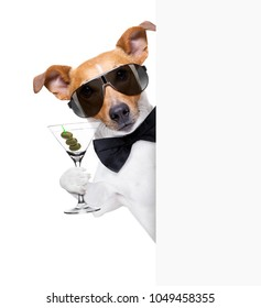 drunk jack russell dog toasting  and drinking a cocktail  martini drink with olives, isolated on white background , behind white blank banner or placard