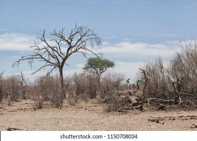 dry african bush landscape with a arid trees and bushes, Hwange National Park, Zimbabwe, Africa