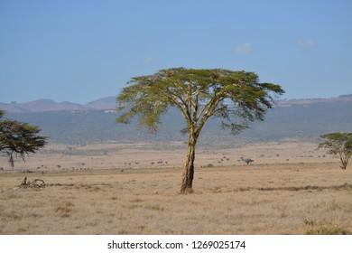 Dry African grassland landscape