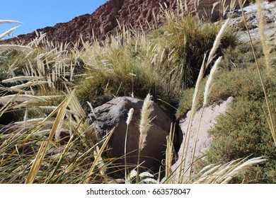 The Dry and Arid Atacama Desert With Some Plants and Beautiful Blue Sky