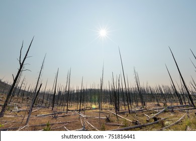 Dry arid landscape of burnt trees in wasteland forest due to global warming and climate change