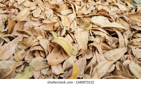 Dry autumn fallen leaves on the ground.