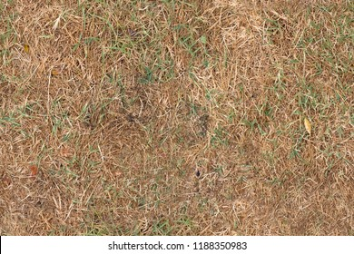 dry autumn grass surface tiled - cyclic texture