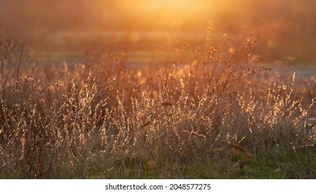 Dry autumn grasses glow in sun rays. Warm natural autumn background with backlight.