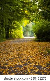 Dry Autumn Leaves