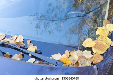 Dry autumn leaves on the bright purple car. Close-up.