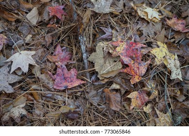 Dry autumn leaves on the floor background texture , Autumn in GA USA.