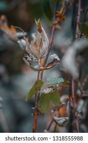 Dry autumnal leaves on tree branch in forest against blurry background