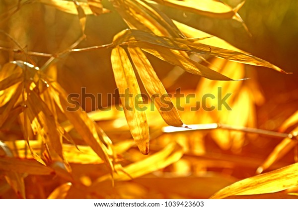 Dry bamboo leaf on light