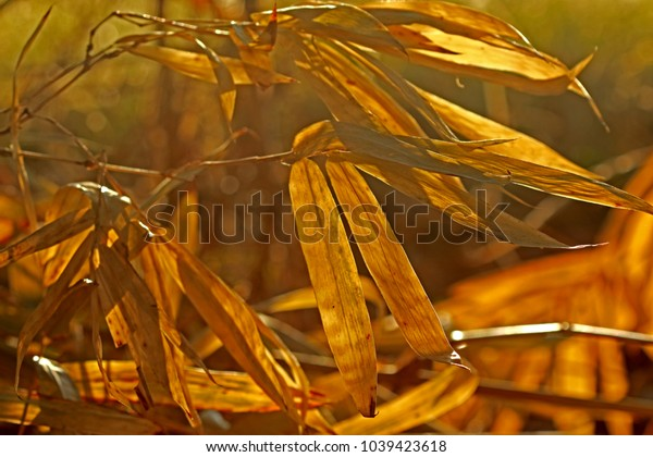 Dry bamboo leaf on light