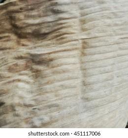 dry banana leaves texture