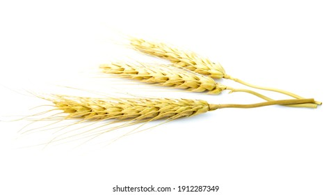 dry barley rice isolated on white background