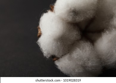 Dry blossom cotton close up on wood desk.