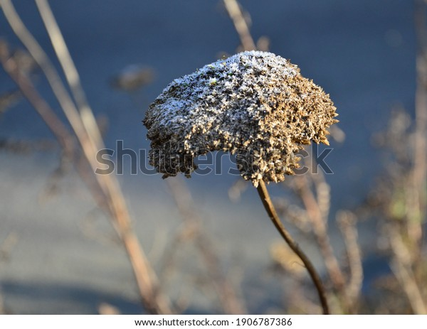 dry-blossom-on-frosty-day-600w-190678738