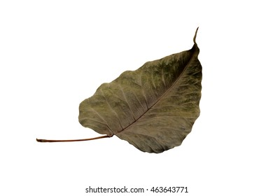 dry bo leaf in clipping path