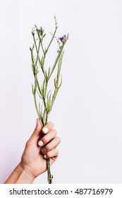 Dry bouquet without flowers in a female hand with a manicure on a light background, vertical framing