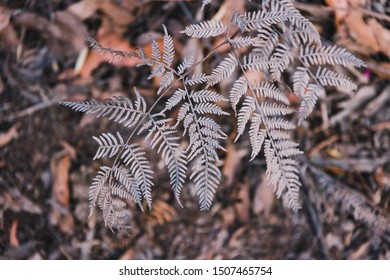 dry braken fern leaves in the Australian bush with muted tones