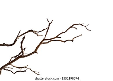Dry branch of dead tree with cracked dark bark.beautiful dry branch of tree isolated on white background.Single old and dead tree.Dry wooden stick from the forest isolated on white background . - Shutterstock ID 1551198374