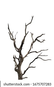 Dry branch of dead tree with cracked dark bark.beautiful dry branch of tree isolated on white background.Single old and dead tree.Dry wooden stick from the forest isolated on white background . - Shutterstock ID 1675707283