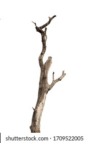 Dry branch of dead tree with cracked dark bark.beautiful dry branch of tree isolated on white background.Single old and dead tree.Dry wooden stick from the forest isolated on white background . - Shutterstock ID 1709522005