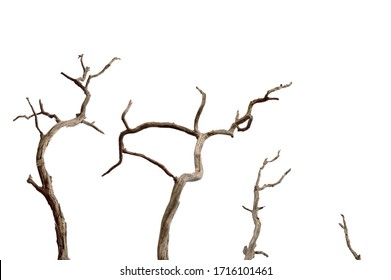 Dry branch of dead tree with cracked dark bark.beautiful dry branch of tree isolated on white background.Set of dead tree.Dry wooden stick from the forest isolated on white background .