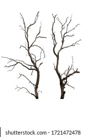 Dry branch of dead tree with cracked dark bark.beautiful dry branch of tree isolated on white background.Single old and dead tree.Dry wooden stick from the forest isolated on white background . - Shutterstock ID 1721472478