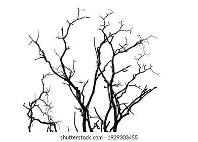 Dry branch of dead tree with cracked dark bark.beautiful dry branch of tree isolated on white background.Single old and dead tree.Dry wooden stick from the forest isolated on white background .