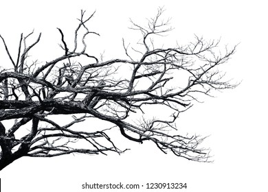 Dry branch isolated on white.