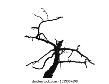 Dry branch isolated on white background